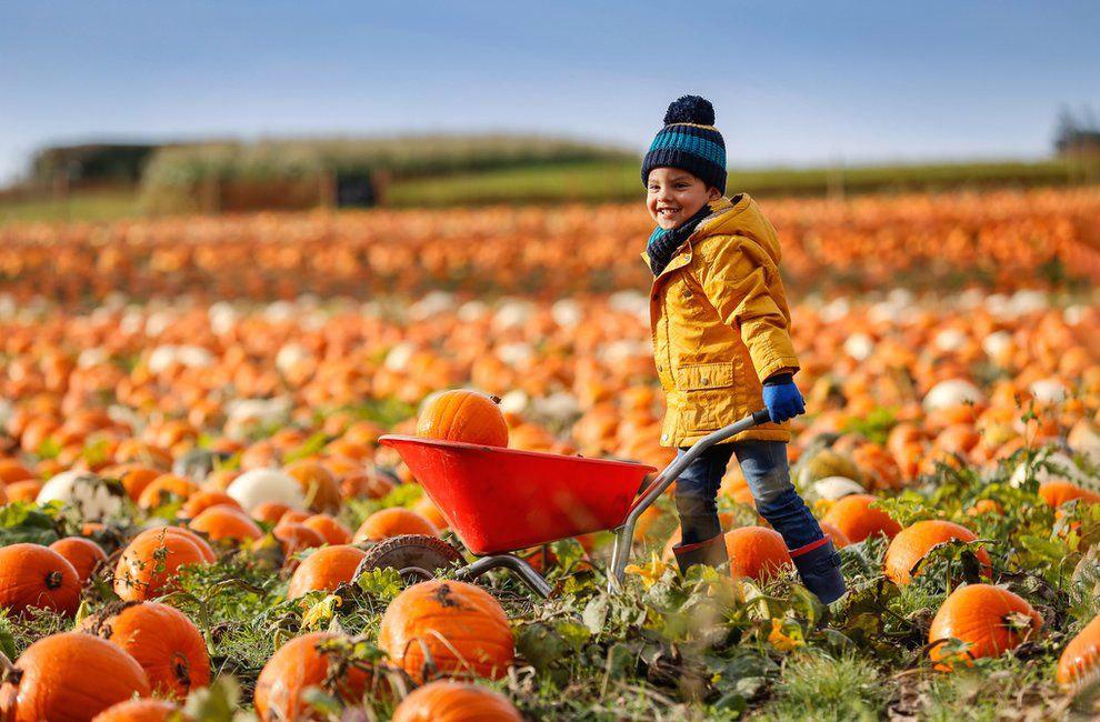 Осень в Великобритании осень