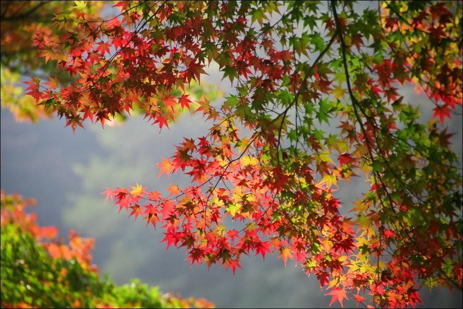 Картинки по запросу красивые фото осени