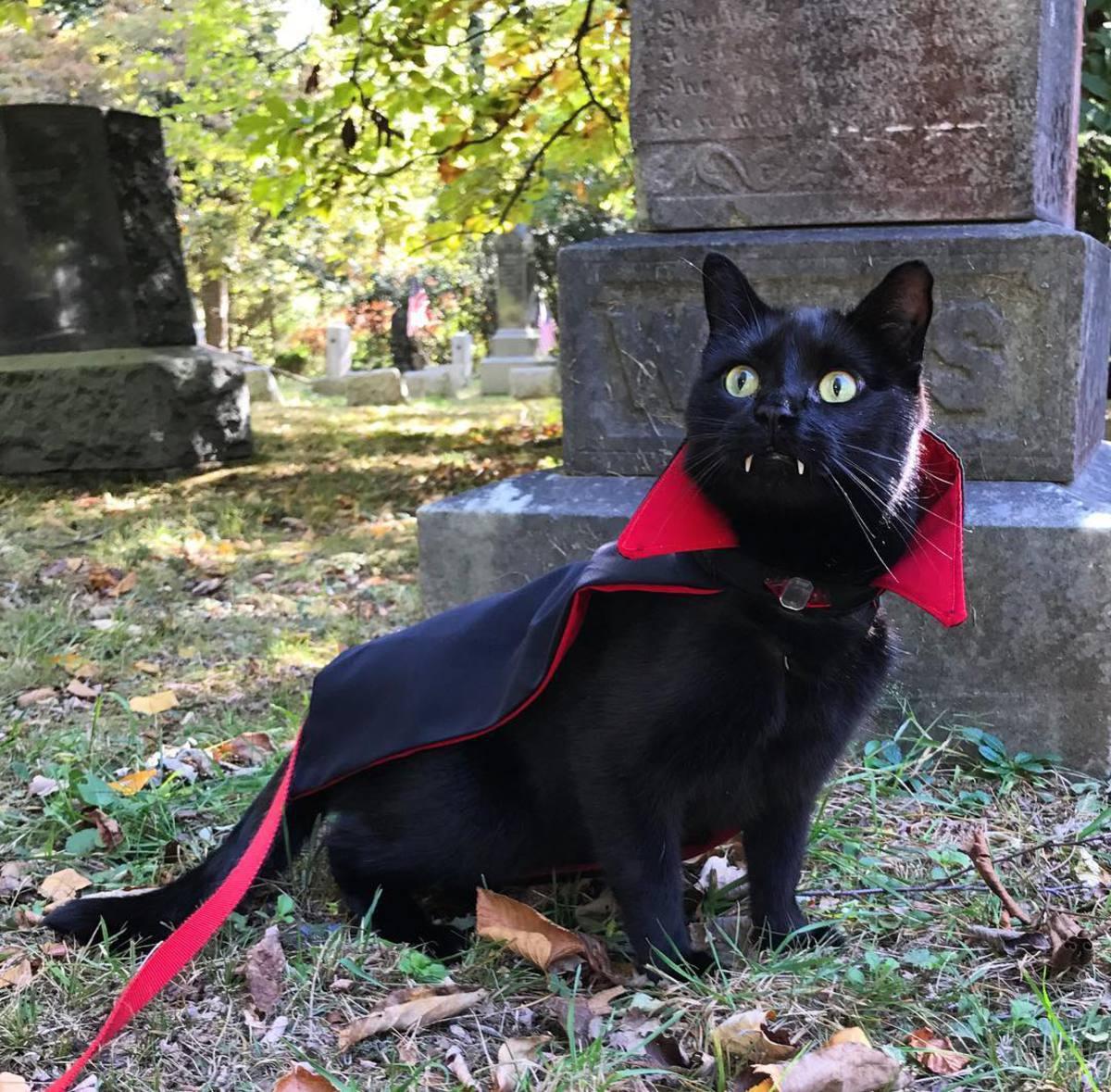 Чёрный кот-Дракула восхитил соцсети