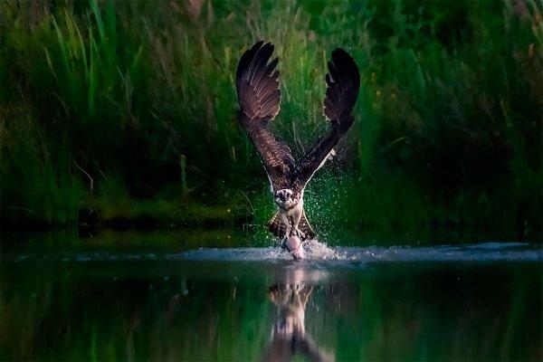 Вдохновленные природой: фотоконкурс National Parks Photography Competition 2020 (10 фото)