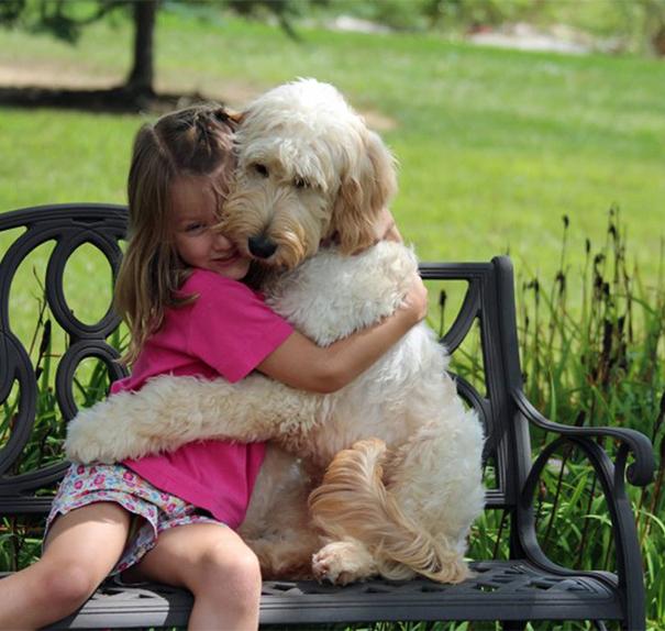 милые собаки обнимают своих хозяев (6)