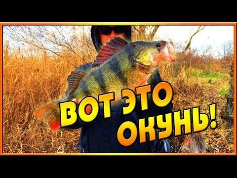 Рыбалка. Трофейный окунь.