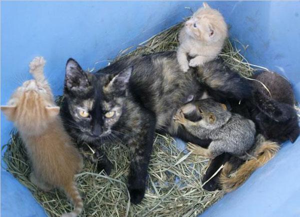 • Кошка усыновила бельчонка