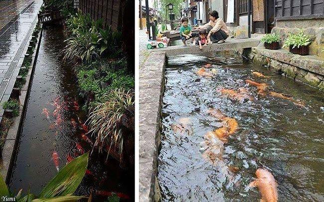 1. Водосточные и сливные каналы с рыбками интересно, путешествия, удивительно, япония