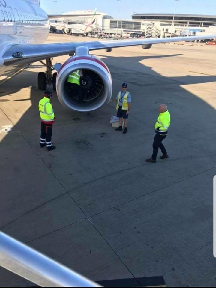 Сотрудники аэропорта случайно обнаружил сову, спящую в двигателе самолёта в мире, добро, птица, самолет, сова, спасение