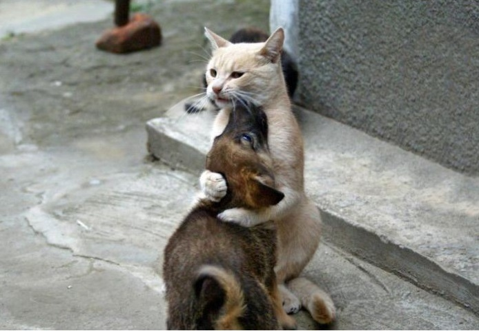 Кот Мазай - лучший папа в мире