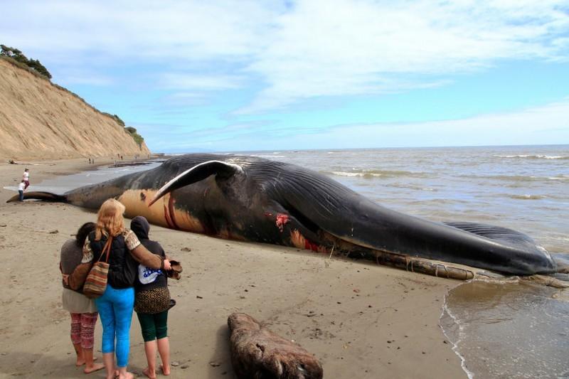 стандартных картинки гигантского кита фотозона ночное