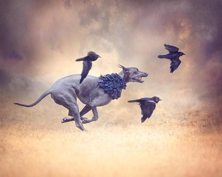 Четыре собаки, четыре попугая, две лошади и один фотоаппарат домашний очаг,животные,позитив