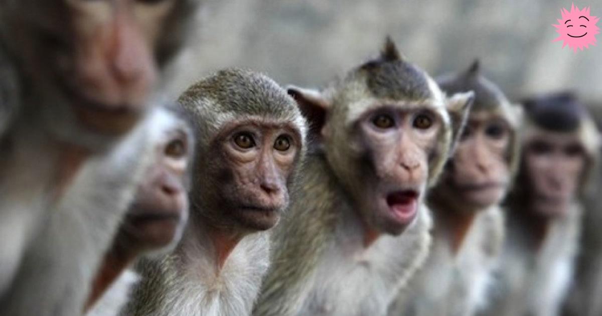 Как 17 обезьян спасли тысячи людей