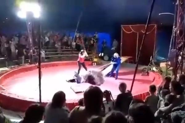 Медведь напал на дрессировщи…