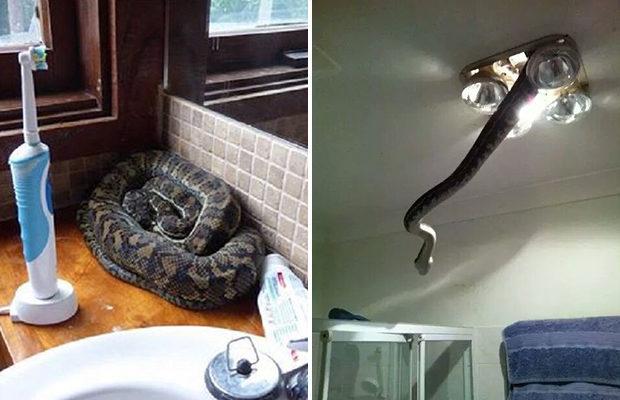 Австралия — ад для тех, кто боится змей!