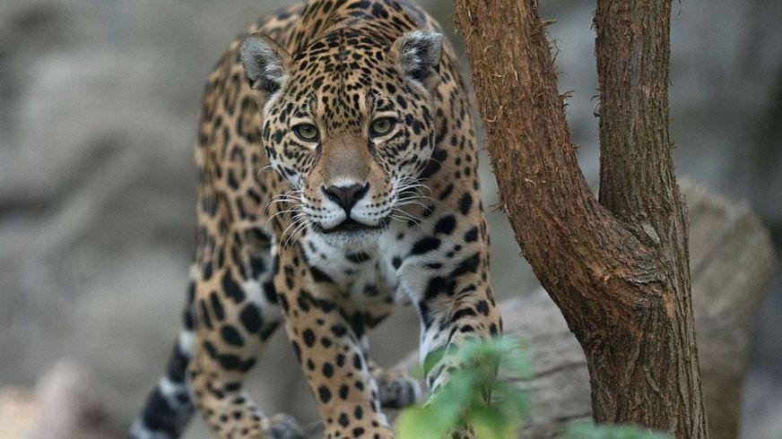 В зоопарке хищникам не докла…