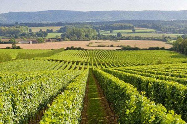 Страны — производители вина, которые не ассоциируются с виноделием