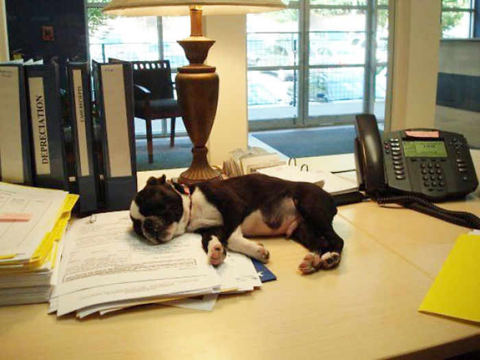 Уснул на годовом отчете.