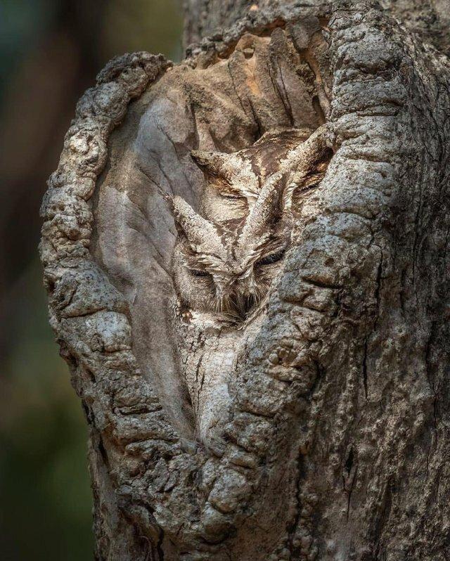 Природа... иллюзия, котики, маскировка, фото, хамелеон, цвет, юмор