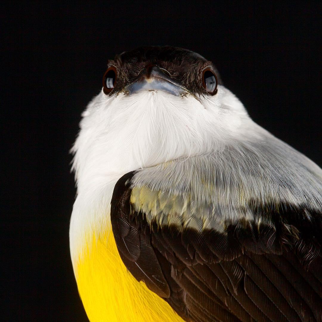 Красота птиц на снимках Шона Грассера