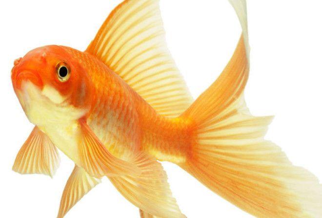 Загадайте свое заветное желание и скорее ловите свою рыбку!