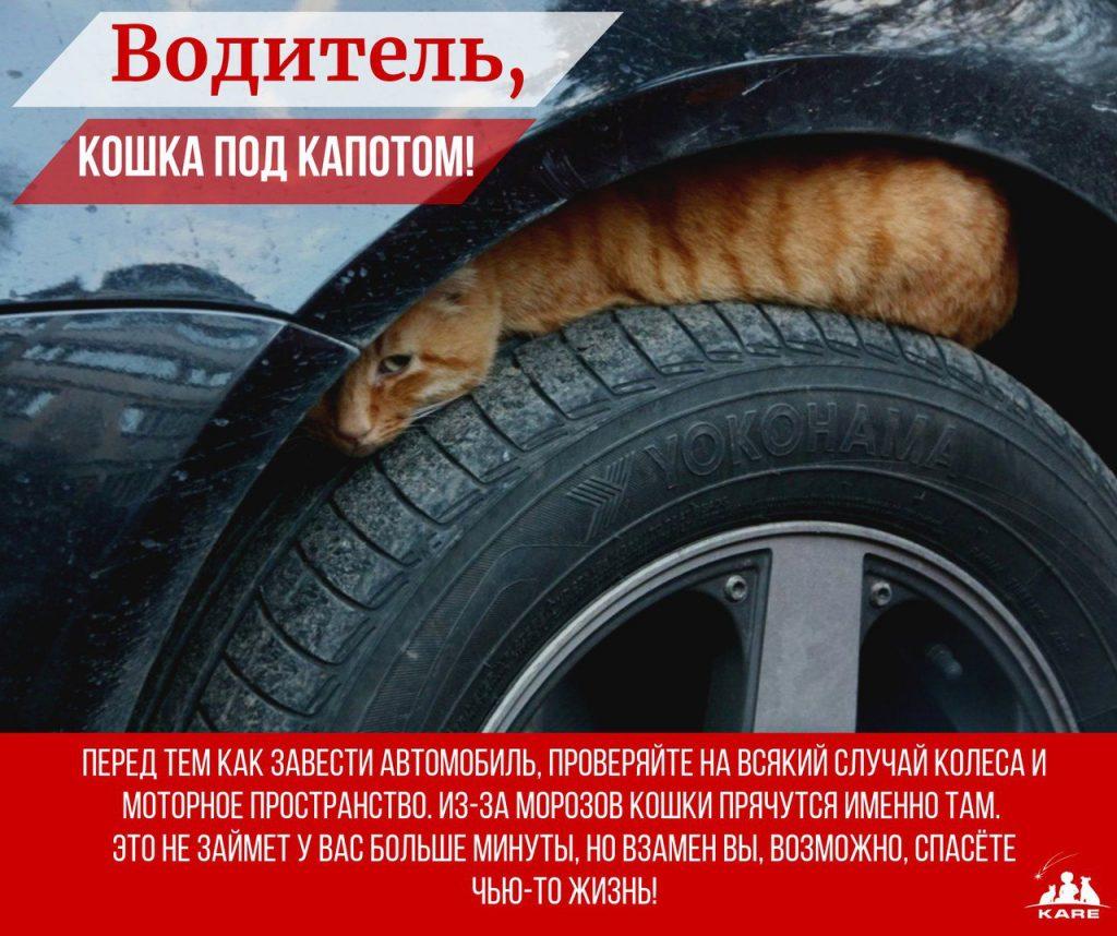http://toptitle.ru/wp-content/uploads/2018/11/5a1e5a540824a-1024x858.jpg