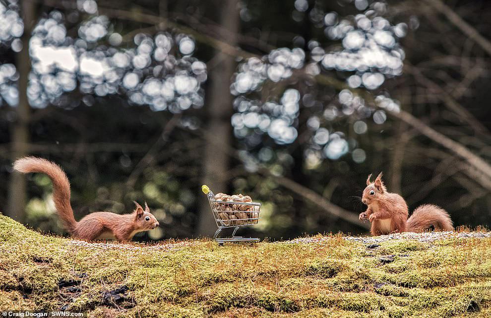 Позитивная фотосессия белок от шотландского фотографа