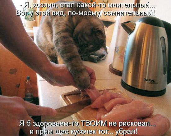 Котоматрицы с кулинарным уклоном 4