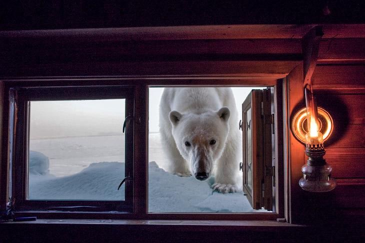 Невероятные фотографии животных Пола Никлена