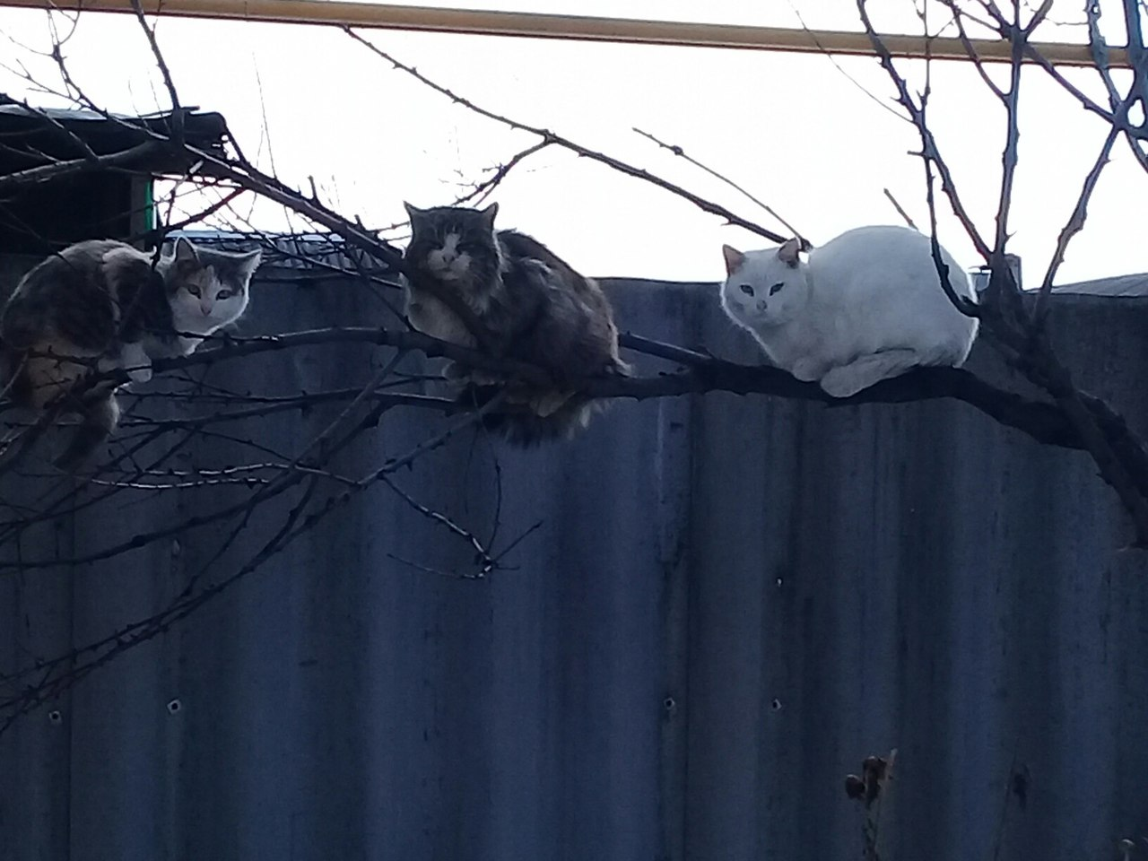 Коты прилетели!