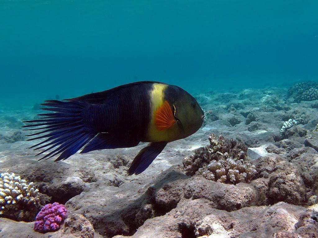 Подводный мир Красного моря в фотографиях