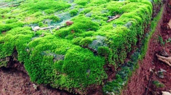 Зеленый обрыв