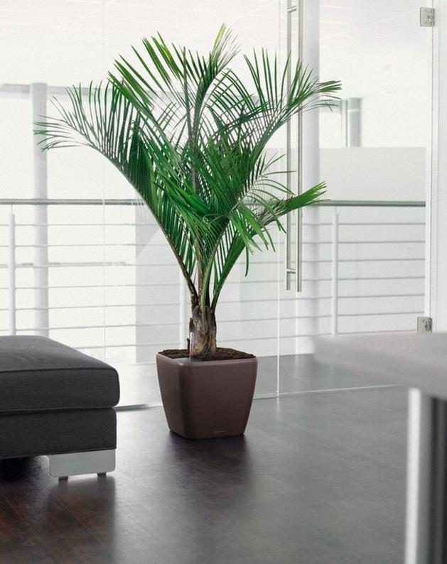 готовится большие офисные растения фото и названия для цветокоррекции применяются