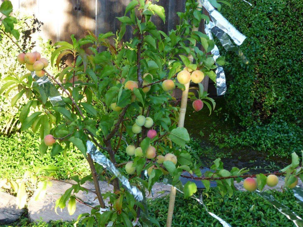 дерево фруктовый салат фото жизни каждого путешественника