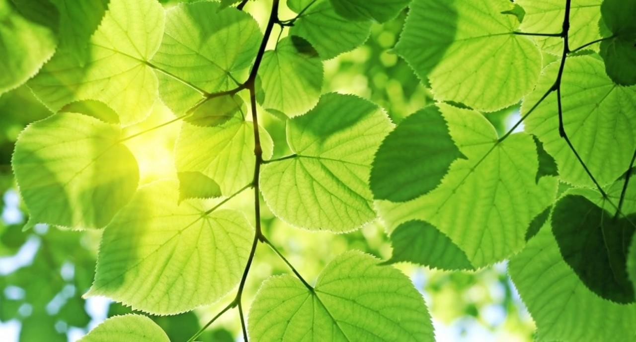 Ученые приблизились к созданию установки для искусственного фотосинтеза