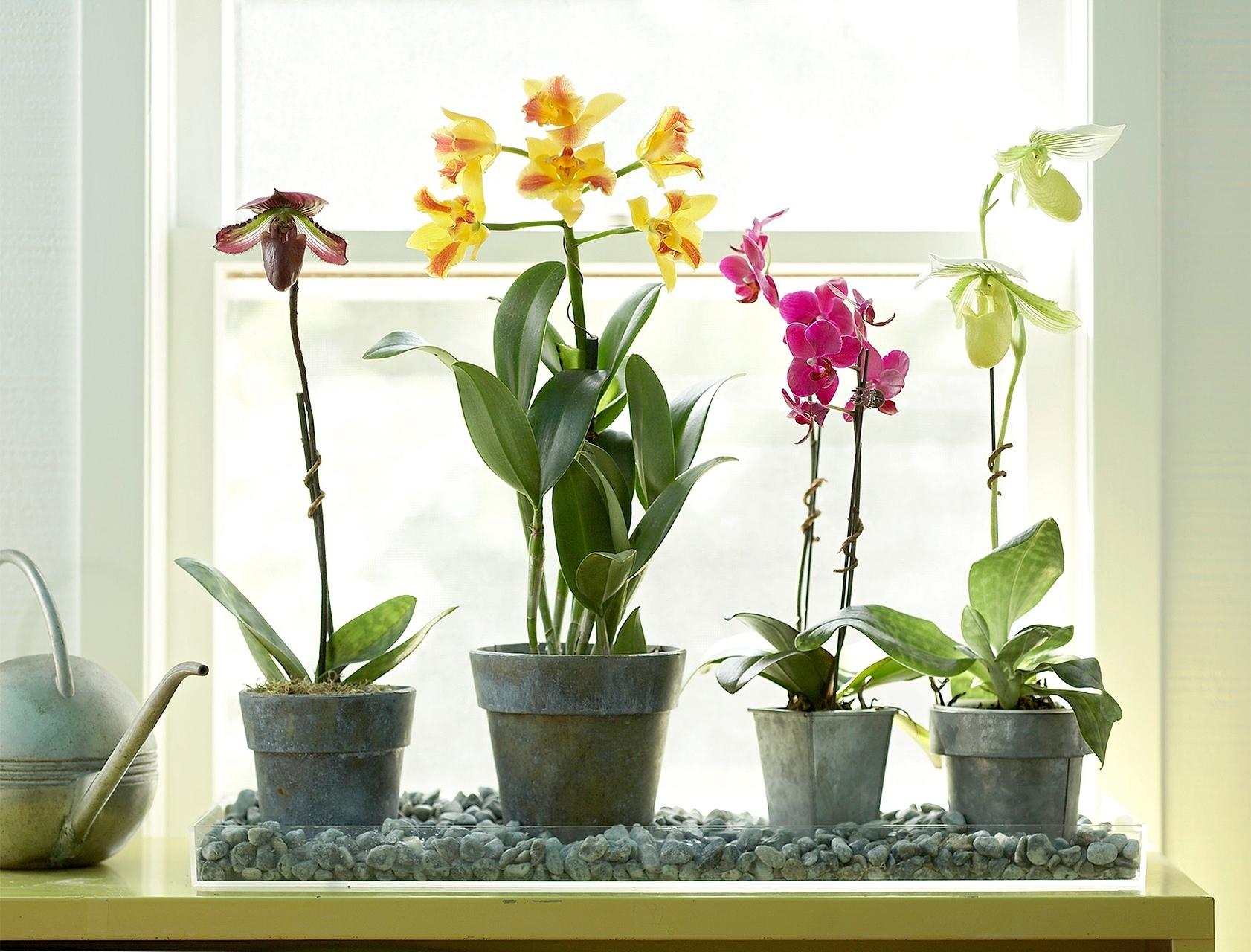 Как поливать орхидеи в горшке с корой