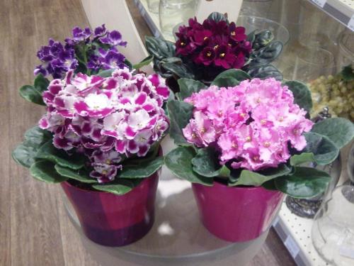 Какие цветы в доме несут тяжелую энергетику