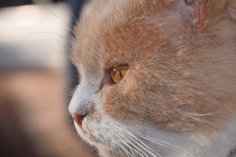 1. Оказывается, что кошачий мозг биологически куда ближе к человеческому, чем собачий. За эмоции у нас с усатыми-полосатыми отвечают одни и те же его участки! кот, кошка, факты