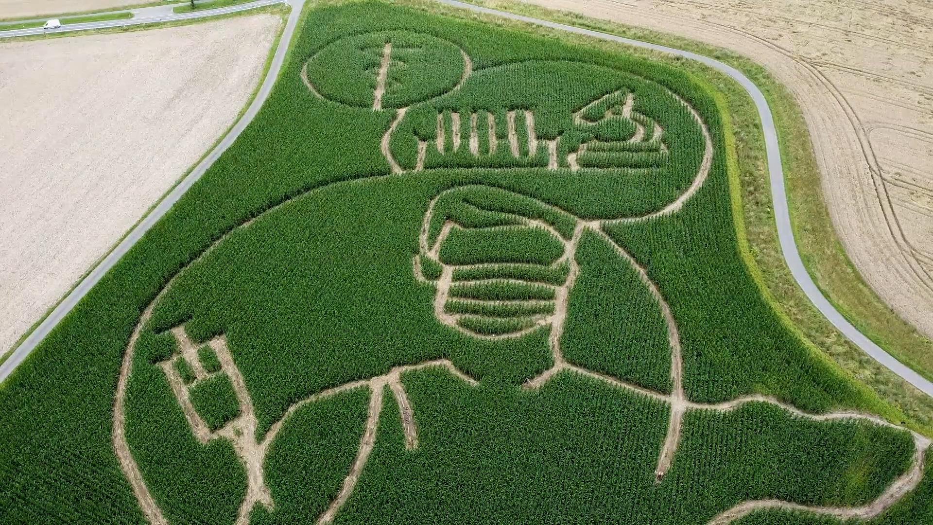 Немецкий фермер посвятил лабиринт на кукурузном поле вакцинации против COVID-19 Общество