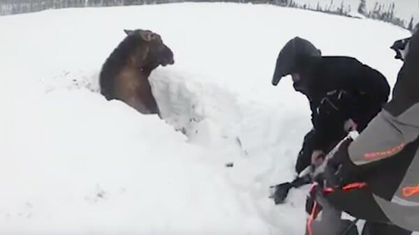Ребята катались на снегоходах, внезапно они увидели что-то в снегу