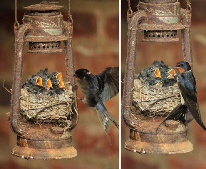 Самые удивительные гнезда животные,природа