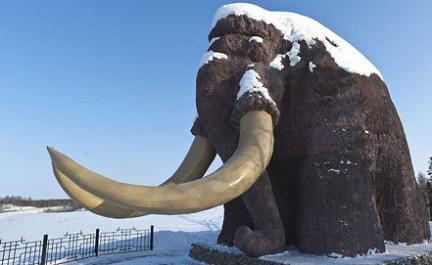 Ученые нашли на Ямале бивень мамонта