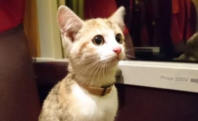 Потерявшийся котёнок самосто…