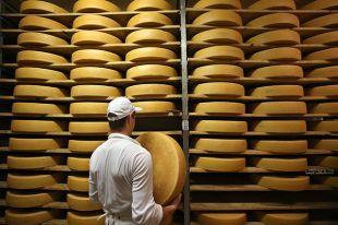 Из чего будут делать сыр в России?