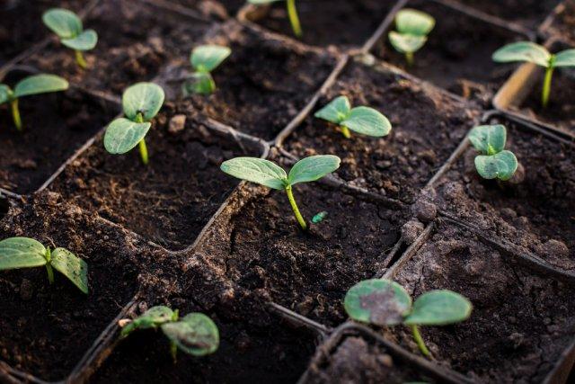 Сравниваем самые популярные емкости для рассады и выбираем лучшие дача,полезные советы,сад и огород