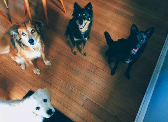 Собаки выражают свою любовь