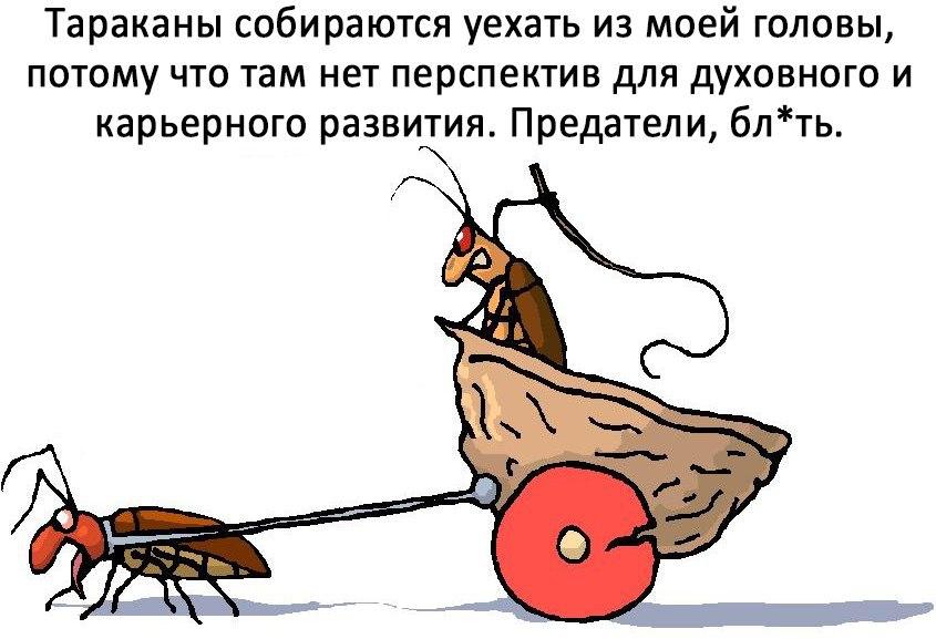 Прикольные картинки про тараканов в голове смешные, открытки санкт-петербурге кальян