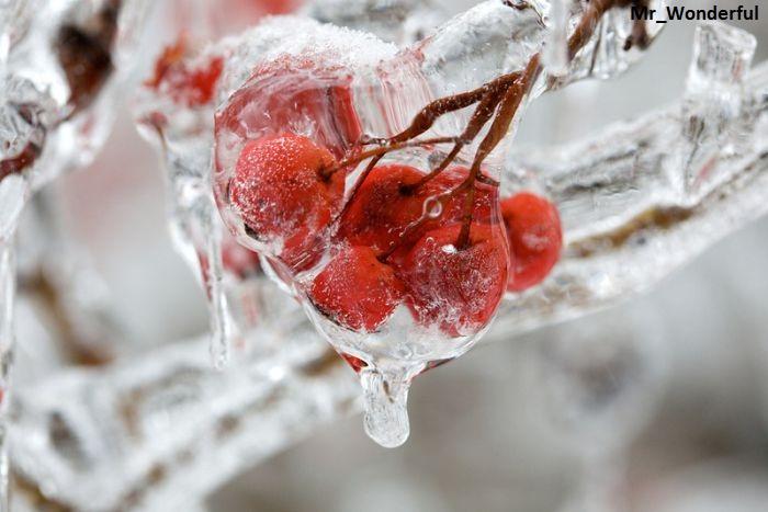 Не люблю я оттепель среди зимы...
