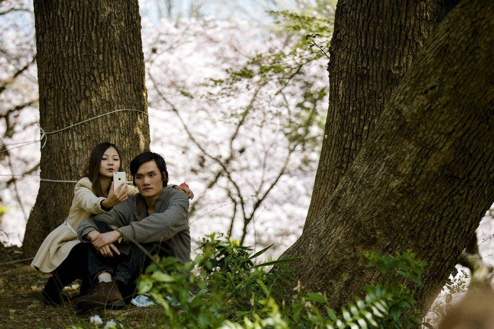 традиция любования цветущей сакурой-14