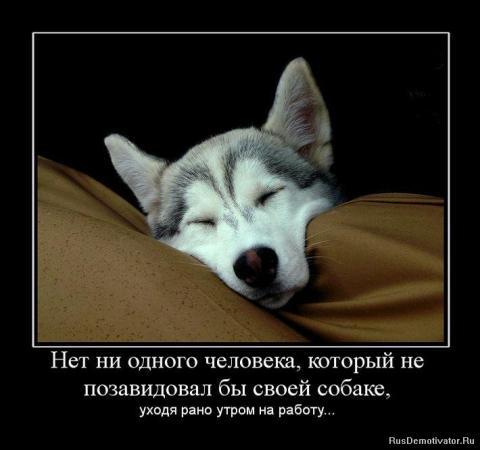 Пёсоматрица. Улыбнитесь )))