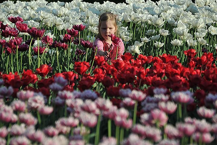 Украшаем Москву: как посадить 540 тысяч цветов в День рождения города