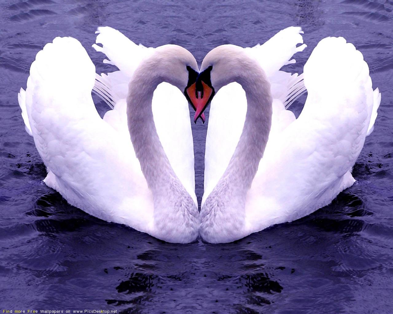 Поздравления с днем свадьбы о лебединой верности