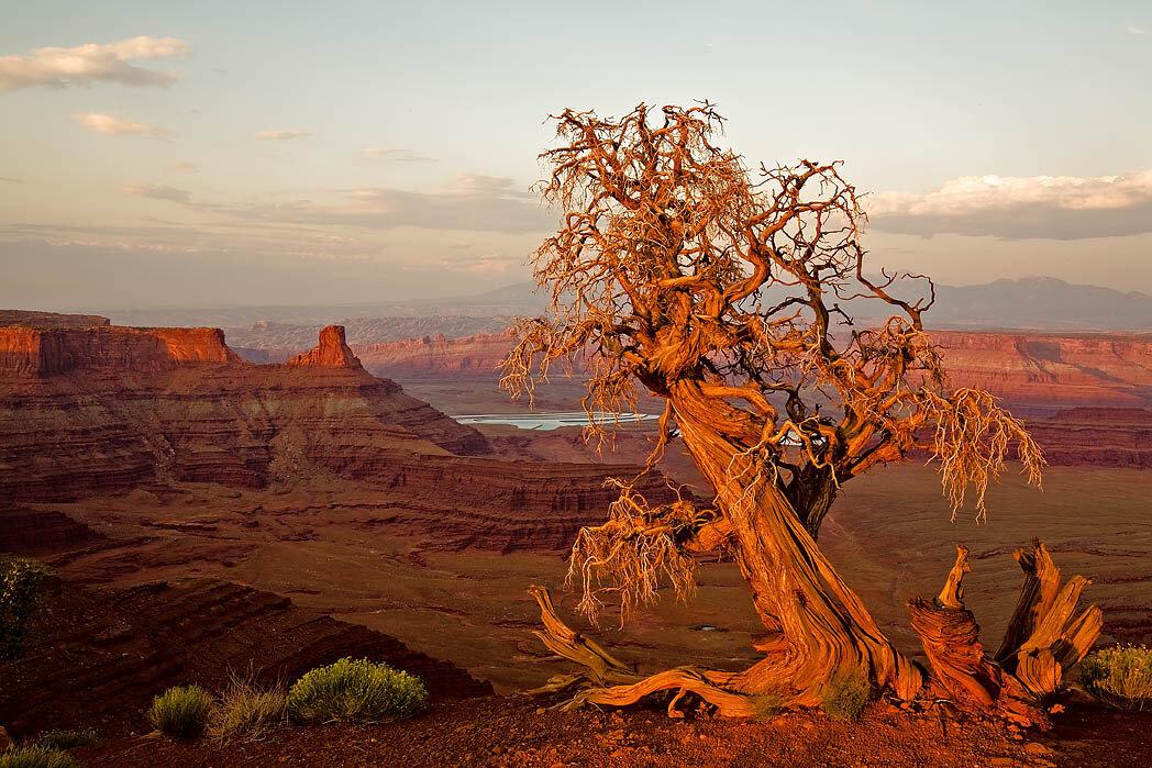 Дерево, убивающее всё живое