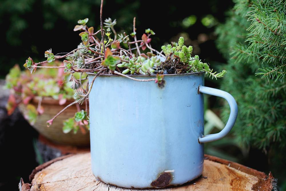 Не спешите выбрасывать старые вещи, они смогут стать прекрасным украшением в саду.